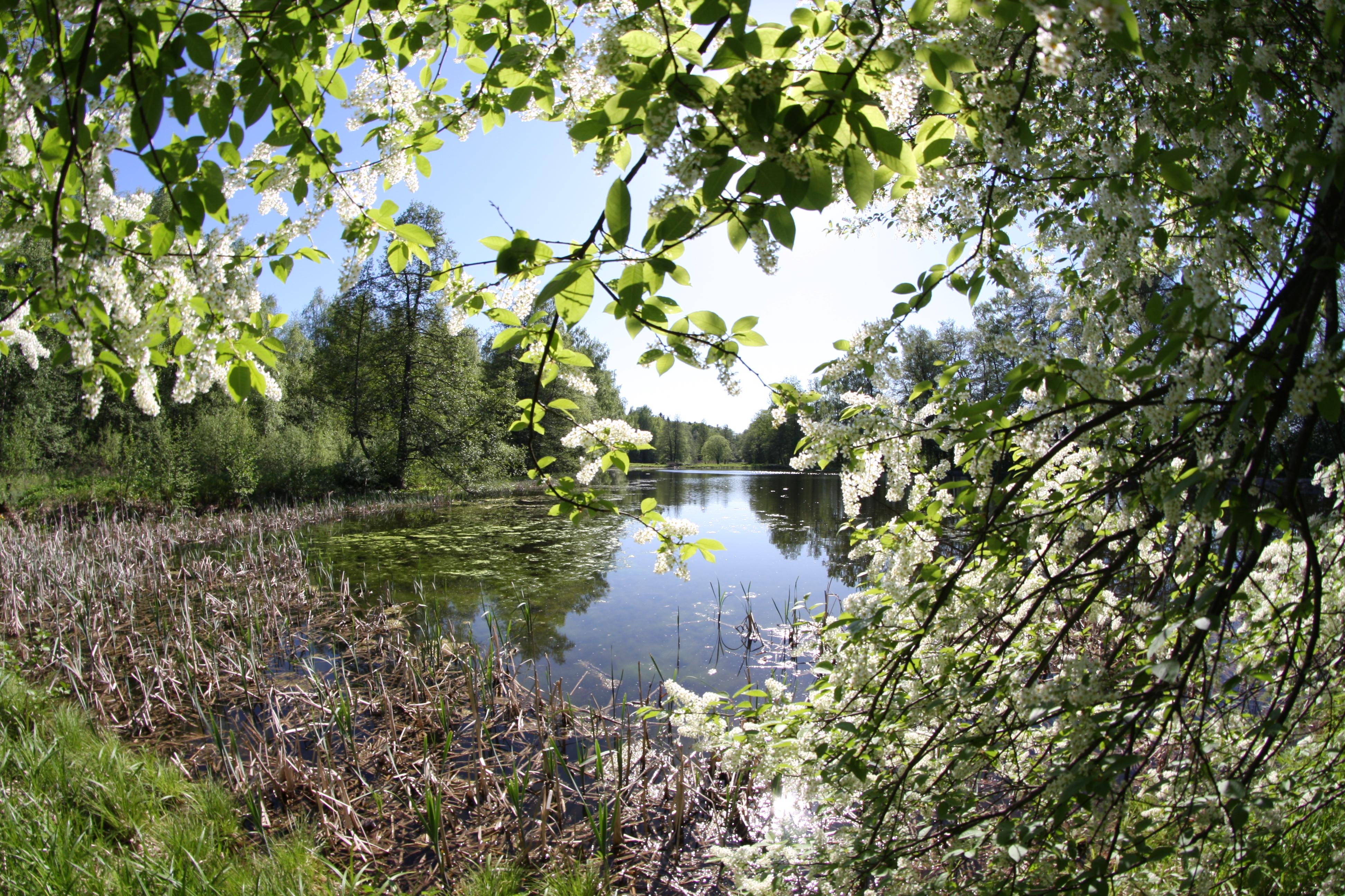 Lohjan ainutlaatuinen luonto. Kuva Markku Levula.