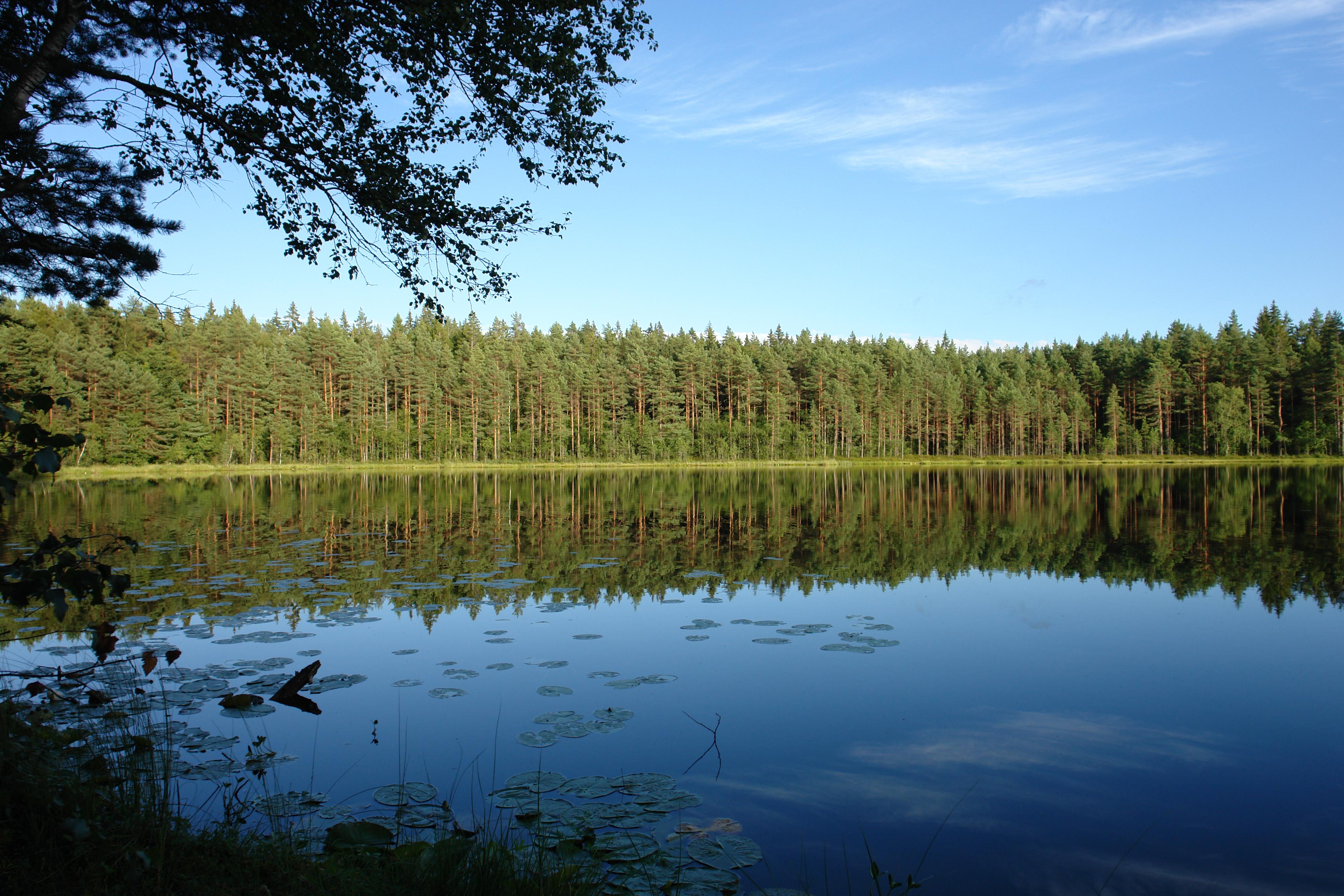 Ahvenalampi, Karnaistenkorpi. Kuva Markku Levula.